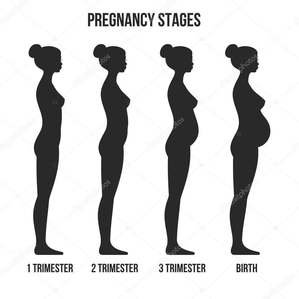 1f62e7582 Etapas del embarazo y nacimiento infografía silueta. Vector de — Vector de  stock