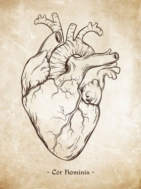 Hand drawn line art  anatomically correct human heart. Da Vinci sketches style over grunge aged paper background. Vintage tattoo design vector illustration.