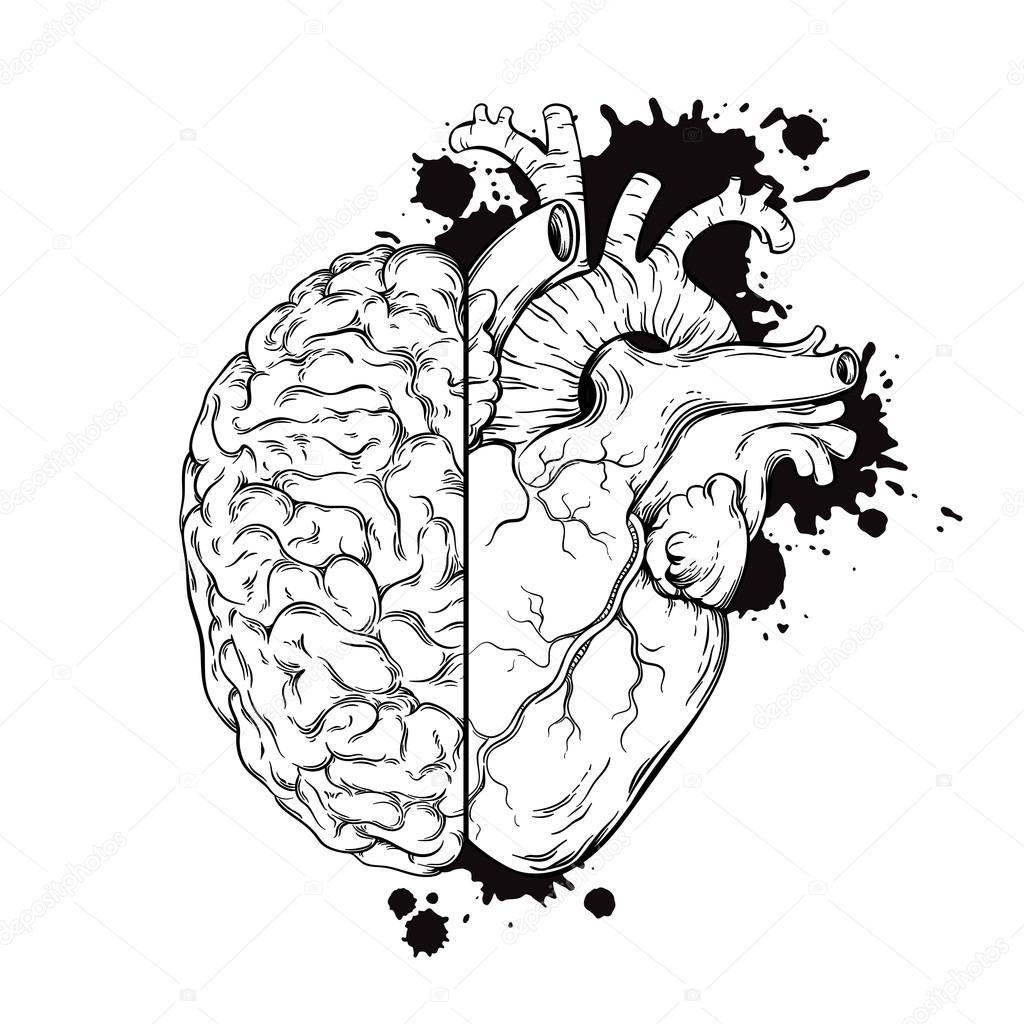 Dibujos Grunge Línea Dibujada Arte Humanos Partes Cerebro Y El