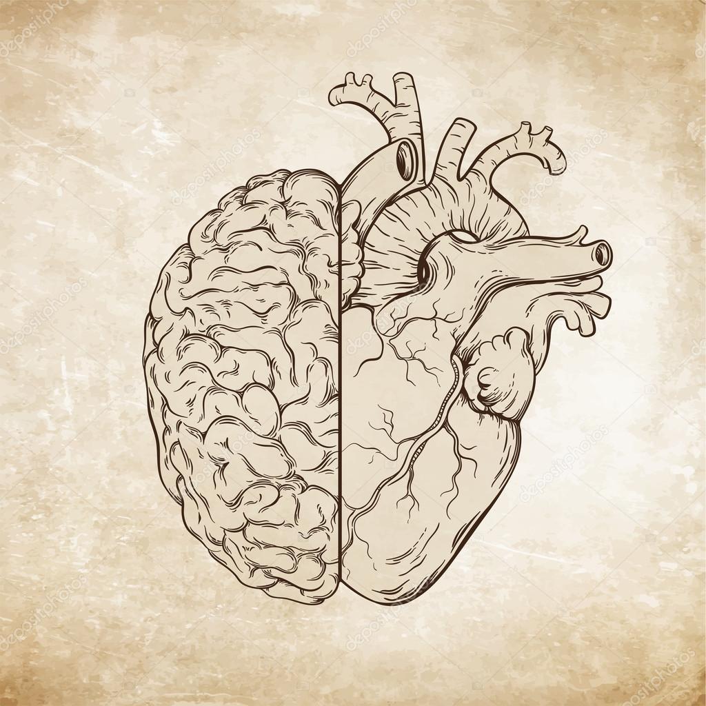 Von Hand gezeichnete Linie Kunst menschliche Gehirn und Herz. Da ...
