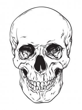 Hand drawn line art anatomically correct human skull isolated. Black and white vector illustration