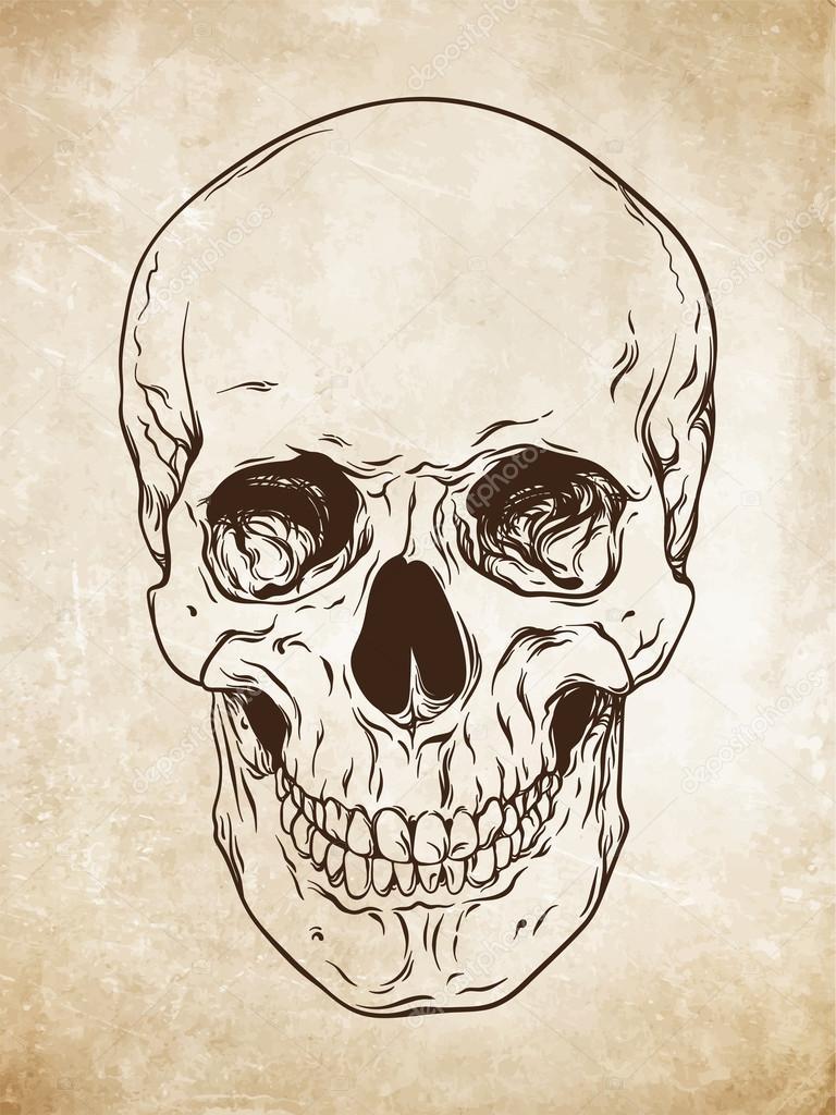 Hand gezeichnete Linie Kunst anatomisch korrekten menschlichen ...