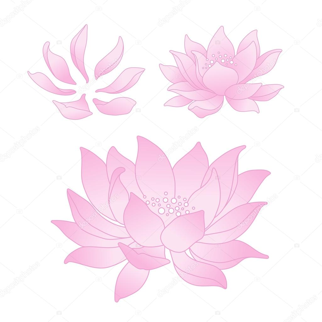 Vector Lotus Flowers And Petals Stock Vector Croisy 79281604