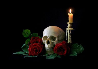 Vanitas. Human skull with red roses isolated