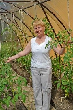 The woman of average years shows plants of tomatoes in the greenhouse