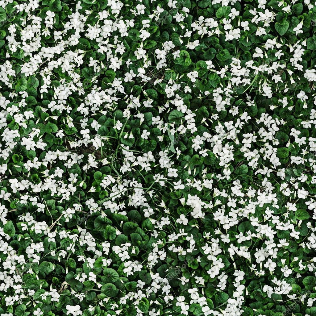 Seamless background with small white flowers stock photo seamless background with small white flowers stock photo izmirmasajfo