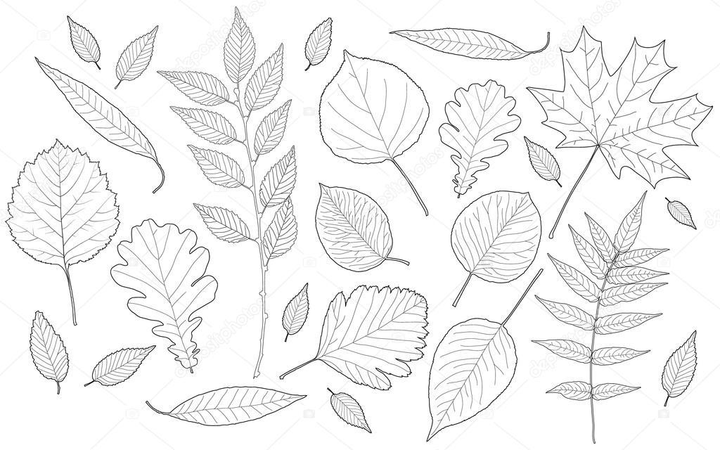 Varuna 52643519 - Diversi tipi di figa ...