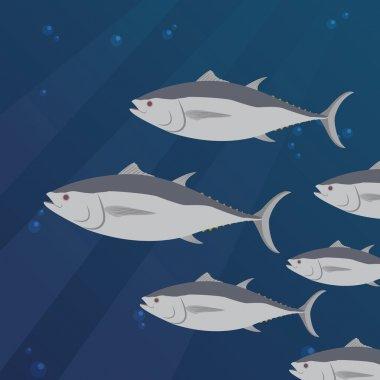 tuna fish swimming