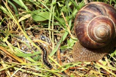 caterpillar and snail