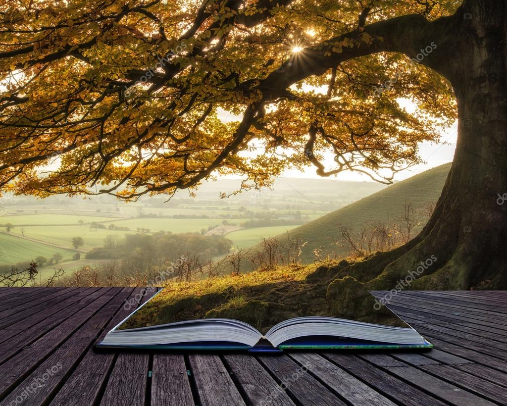 Book concept Stunning Autumn morning sunlight lights landscape t