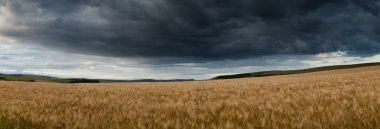 Stunning countryside panorama landscape wheat field in Summer su