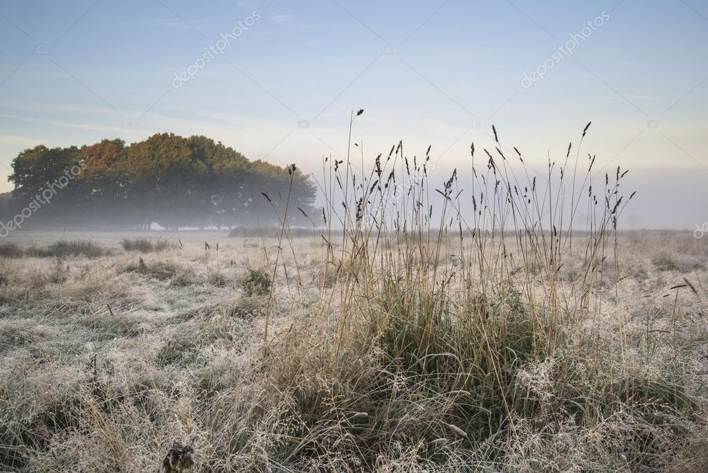 Beautiful Autumn Fall foggy dawn landscape over frost covered fi