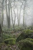 Krajina lesů s hustá mlha podzim podzim