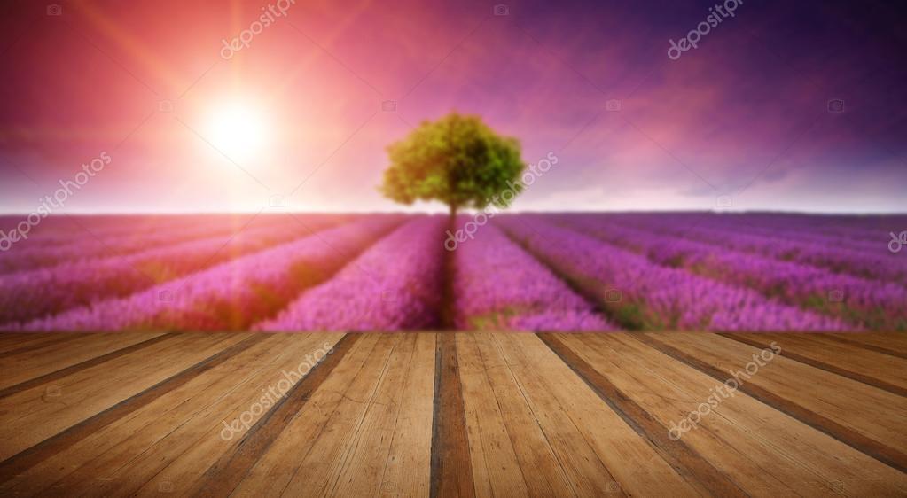 Фотообои Stunning lavender field landscape Summer sunset with single tree