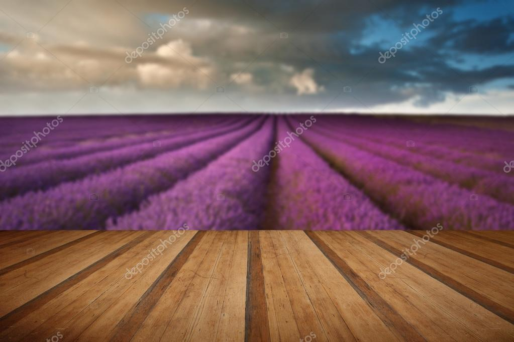 Beautiful lavender field landscape with dramatic sky with wooden