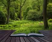 gyönyörű élénk buja zöld erdő erdős táj képe