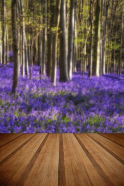 Beautiful landscape of Spring bluebells in forest with wooden planks floor stock vector