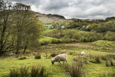 Lake District landscape with stormy sky over countryside anf fie