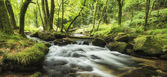 Beautiful landscape of river flowing through lush forest Golitha