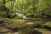 Ohromující krajina iamge řeky protékající svěží zelená