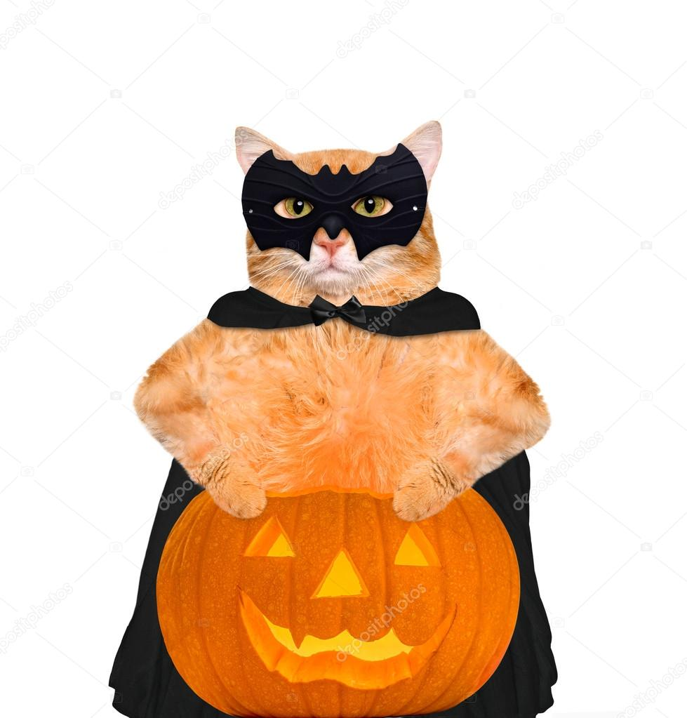 Cat wearing costume for halloween with a pumpkin. Isolated on white background. u2014 Photo by RasulovS  sc 1 st  Depositphotos & Cat wearing costume for halloween with a pumpkin. u2014 Stock Photo ...