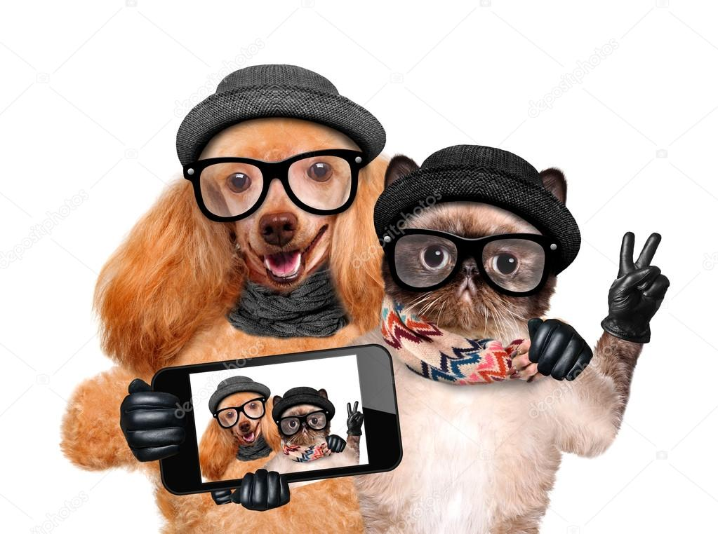 Dog with cat taking a selfie together with a smartphone.