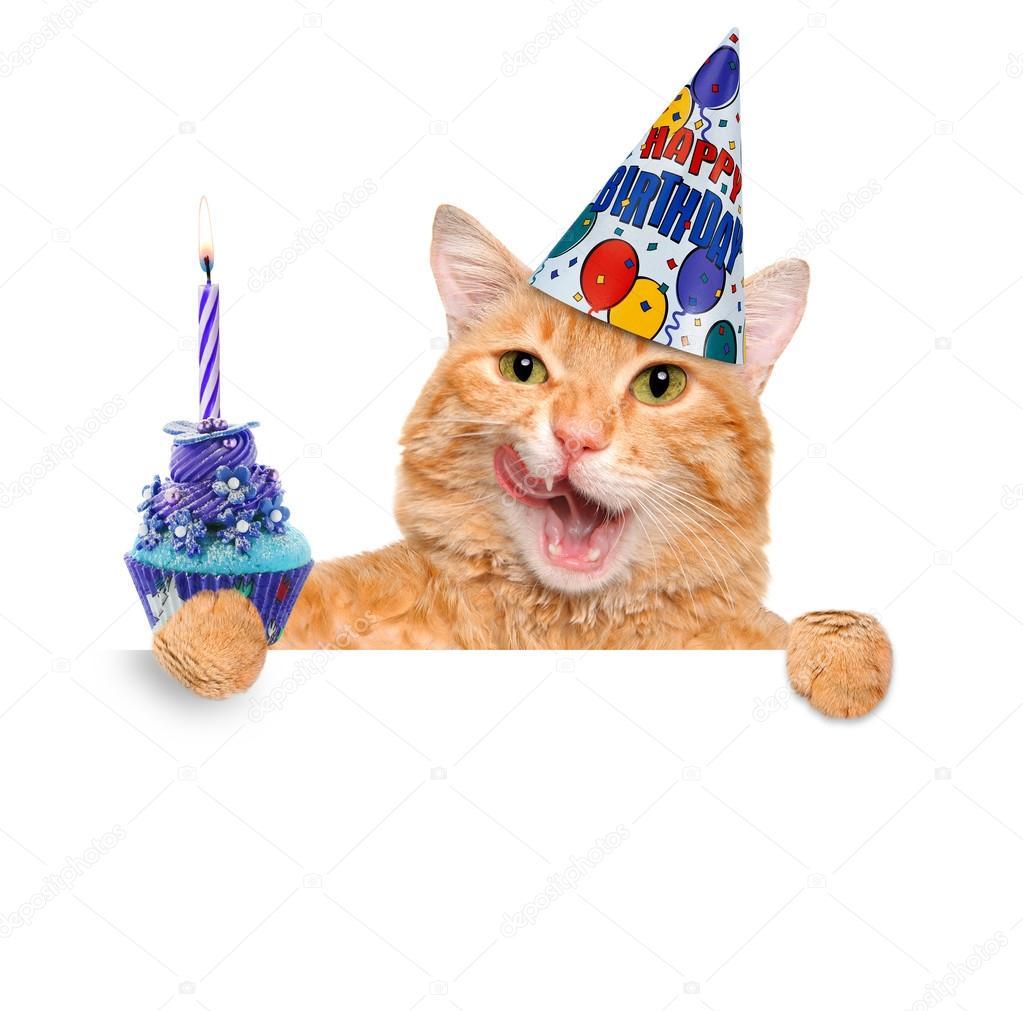 Verjaardag Kat Stockfoto Rasulovs 73607485
