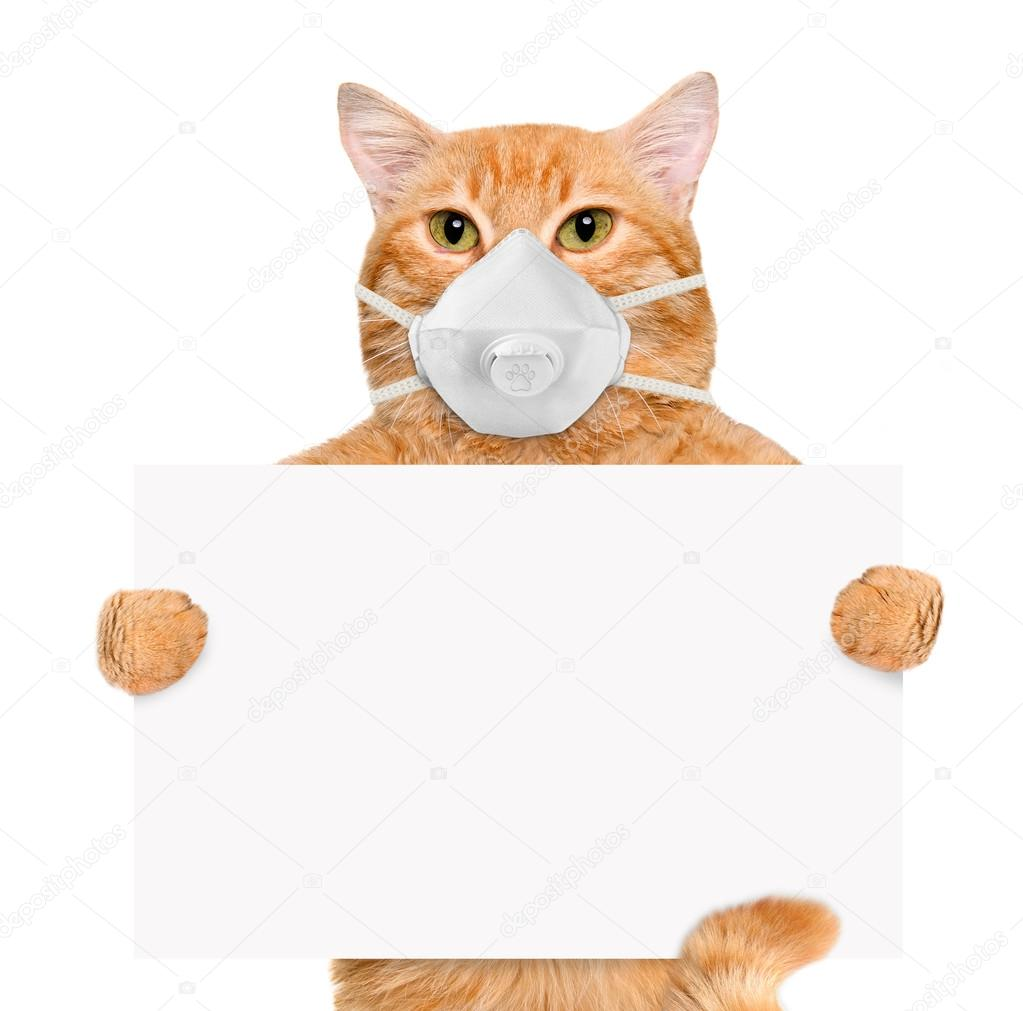 Cat wearing a face protective mask