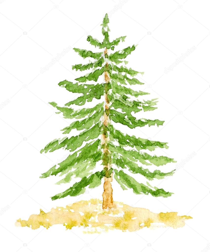 Watercolor Fir Tree Hand Drawn And Painted Stock Photo