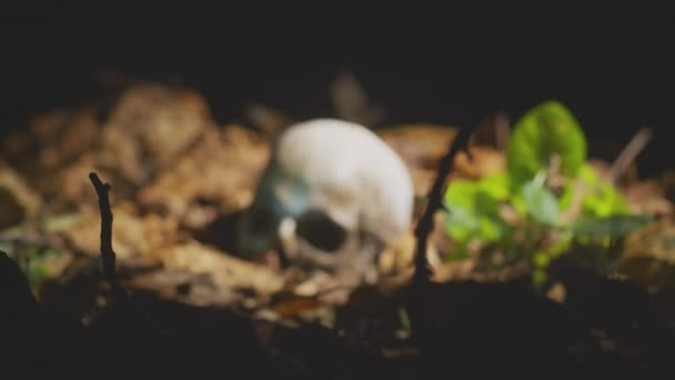 Finding human skull in the forest at night