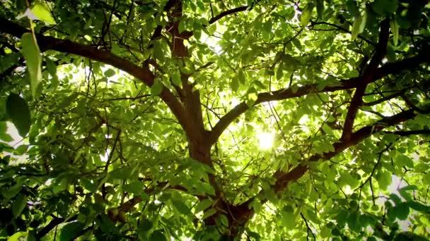 Jasná světla pod velkým stromem za větru