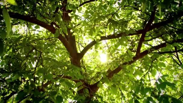 Élénk fények, fúj a szél nagy fa alatt