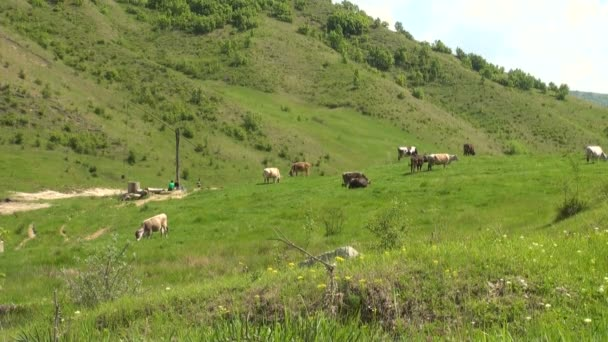 Buzau - Romania - Summer time in country side