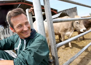 Farmer sitting by cows in barn