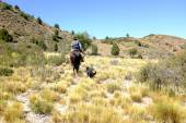 Gaucho koni v severní Patagonie