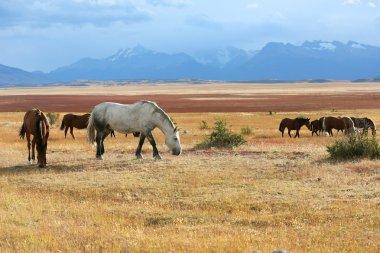 Horses grazing in farmland