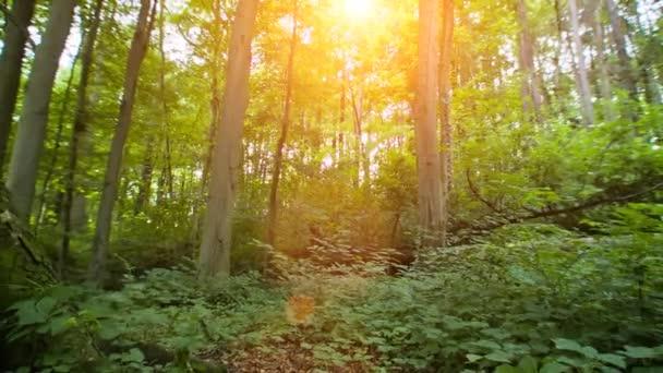 Sole di rottura attraverso gli alberi