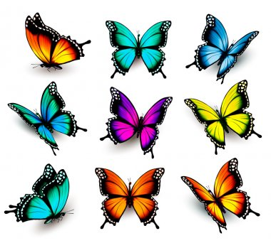 Collection of colorful butterflies, flying in different directio