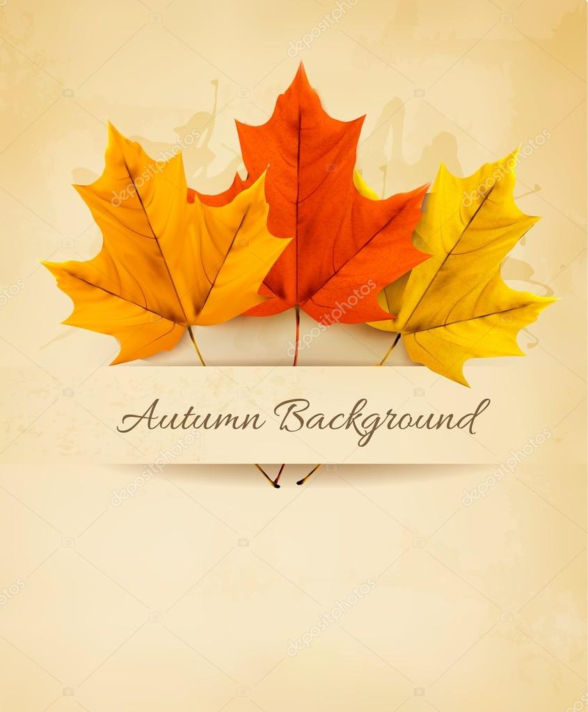 Autumn background with three colorful leaves. Vector.