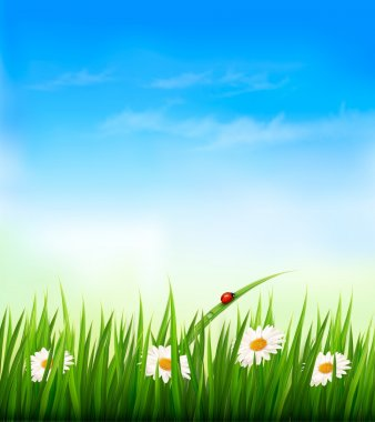 Spring background with sky, flowers, grass and a ladybug. Vector