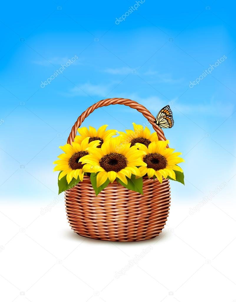 Spring background. Basket full of sunflowers and a butterfly. Ve