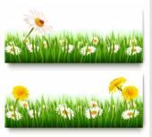 Két természet bannerek színes tavaszi virág, a katicabogár. Ve