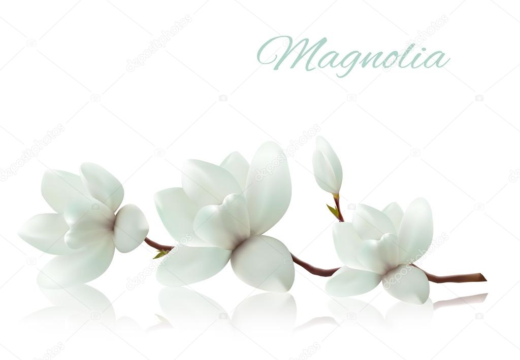 Flower background with blossom branch of white magnolia. Vector