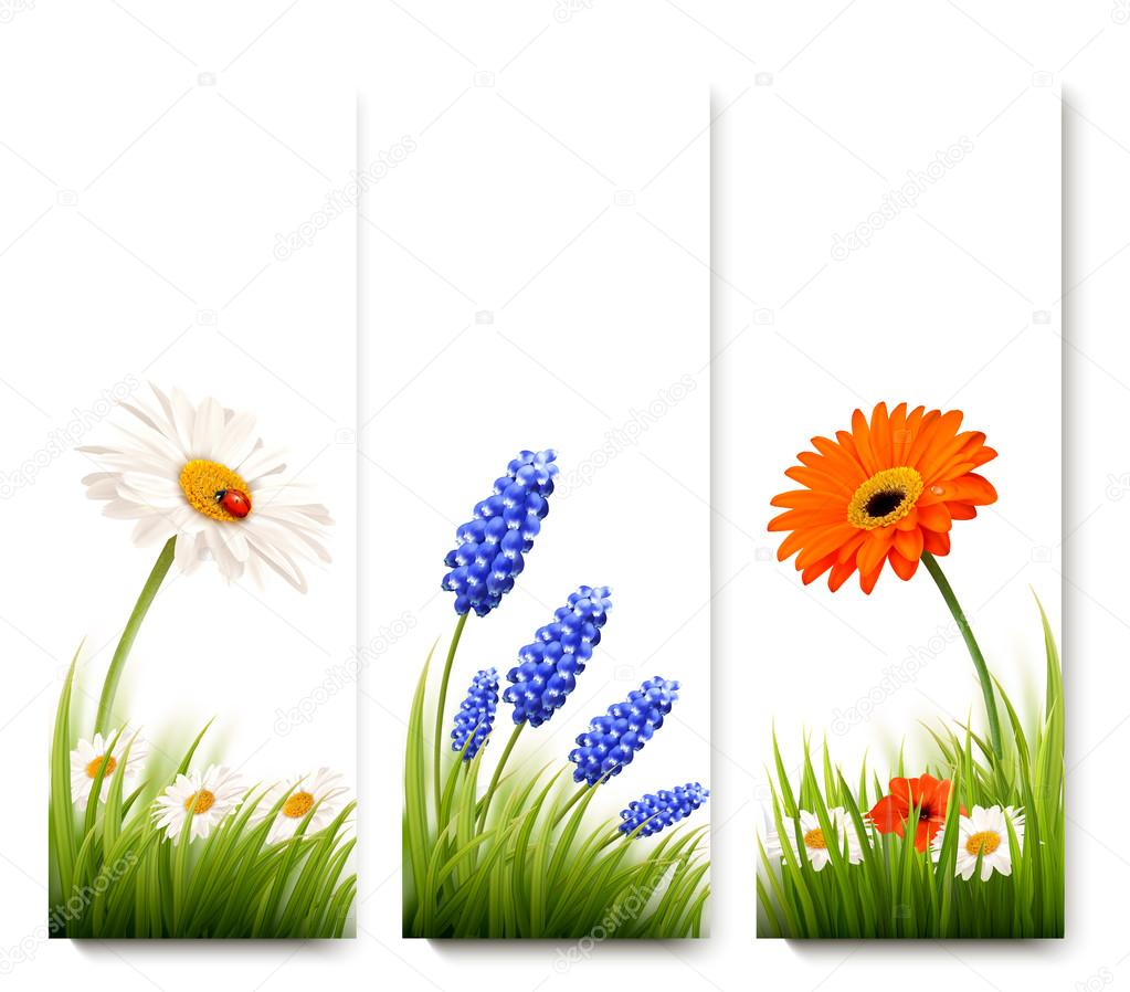 Three flower banners. Vector.