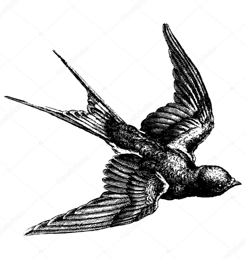 Vintage bird | Vintage bird — Stock Vector © EnginKorkmaz ...