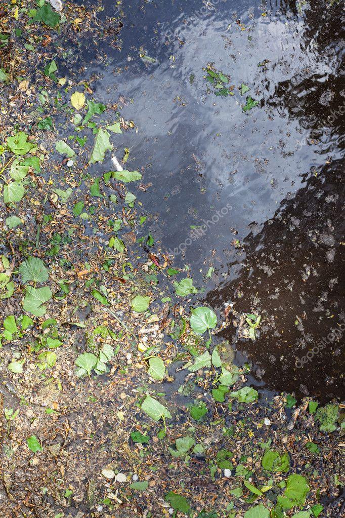 fallen green leaves, birch catkins and pollen