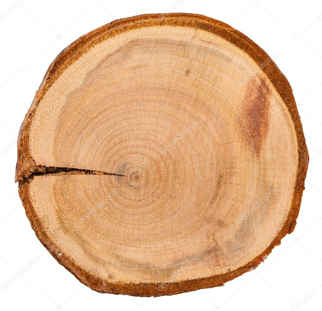 cernes annuels dans la coupe transversale de tronc d arbre de la prune photographie vvoennyy. Black Bedroom Furniture Sets. Home Design Ideas