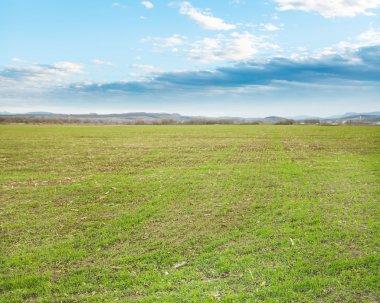 """Картина, постер, плакат, фотообои """"сельскохозяйственные поля с зеленой травы в начале весны Вечерний"""", артикул 65147537"""