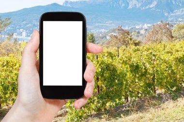 photo of vineyard in Massandra region of Crimea