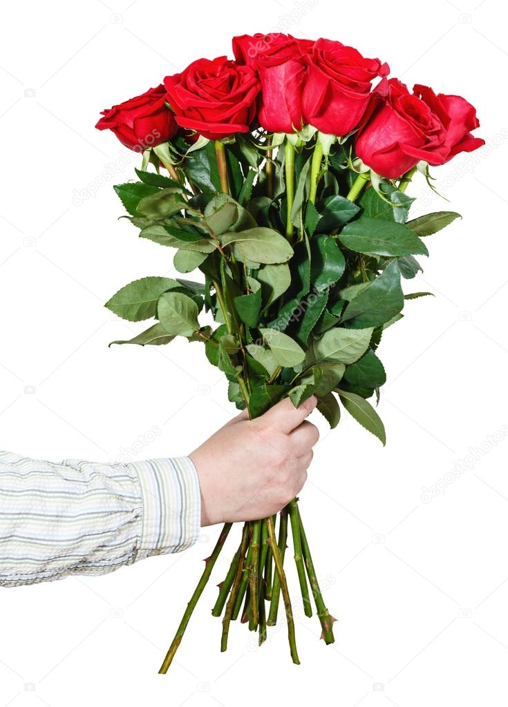 hand giving bouquet of many red roses isolated — Stock Photo ...